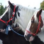 Ballinasloe Horses on Luxury Hotels Ireland tourist attractions