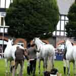 Horse Show Dublin
