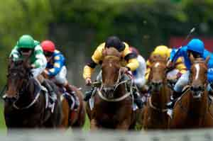 ace horses