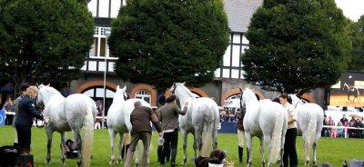 Video: Dublin Horse Show