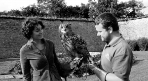 Adare falconry on luxury hotels Ireland